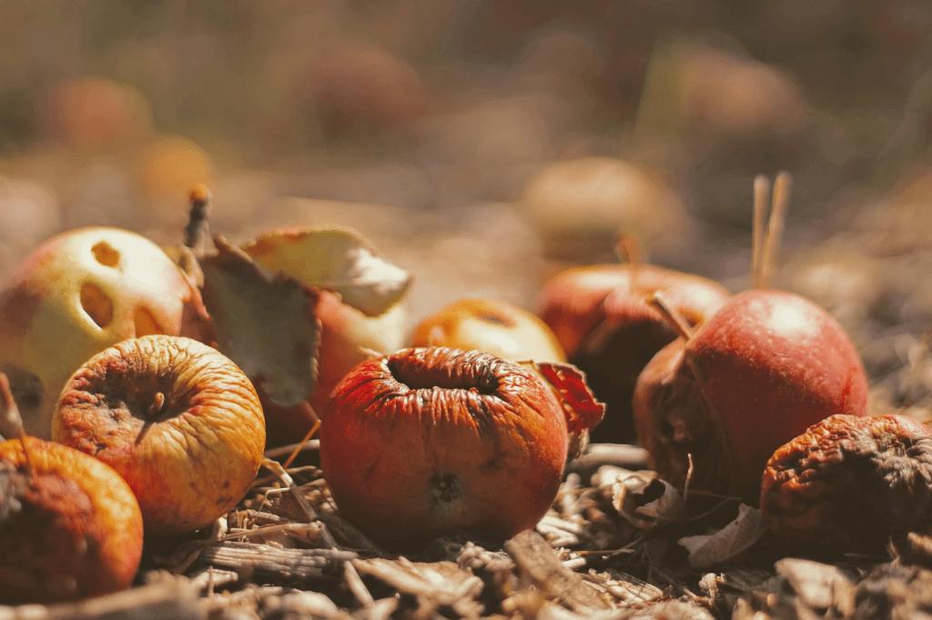 5 buone pratiche per ridurre gli sprechi alimentari